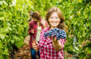 Wine Production in Bulgaria