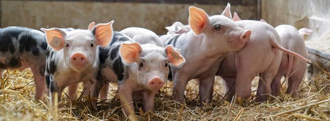 China bans pork imports from Germany