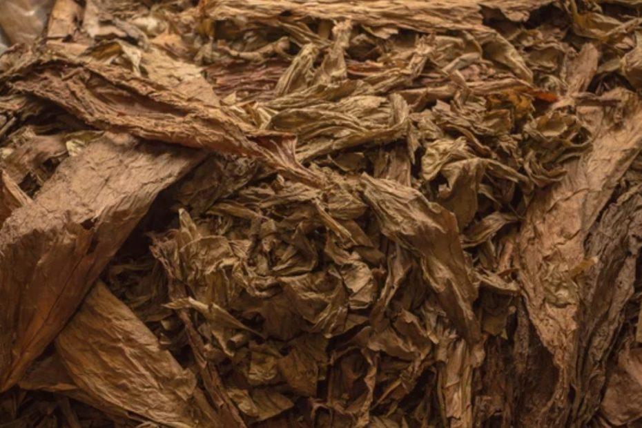 海关总署公告2021年第21号丨关于进口保加利亚烟叶植物检疫要求的公告