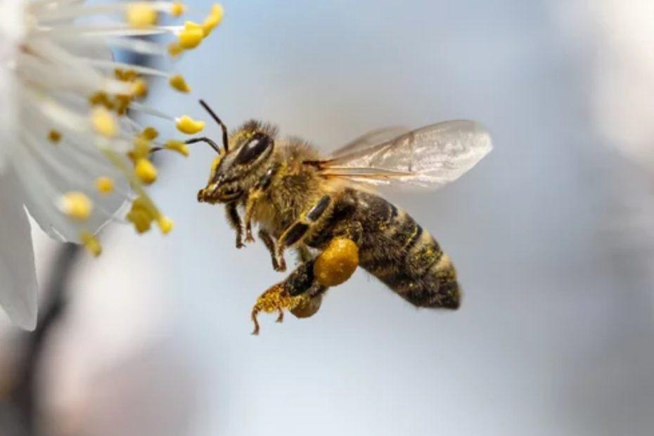 Износа на пчелен мед за Китай е нараснал 2.37 пъти